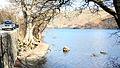 Lake Ullswater - geograph.org.uk - 1243484.jpg