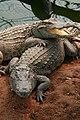 Lam Soon Crocodile Farm (南顺鳄鱼园) 2.jpg