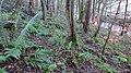 Lambroughton Woods, North Ayrshire, Scotland.jpg