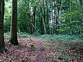Landschaftsschutzgebiet Waldgebiete bei Dielingdorf und Handarpe LSG OS 00025 Datei 18.jpg