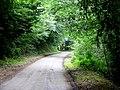 Lane through Bond's Wood - geograph.org.uk - 1439619.jpg