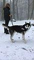 Leïko in snow.jpg