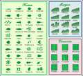 Leaf morphology es.png
