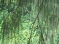 Lebatnya hutanku.jpg