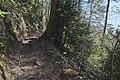 Leitenwälder der Isar 0646.jpg