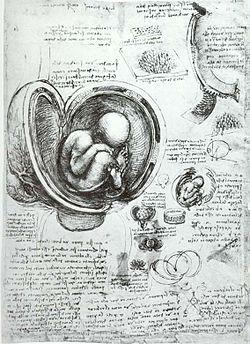 Estudos de Embriões (1510-1513)