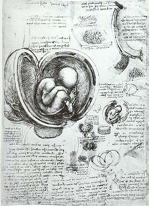 Medical Renaissance - This drawing by Leonardo da Vinci of a foetus in the womb is one of many detailed anatomical drawings by the artist