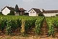 Les vignobles de la côte de Beaune.jpg