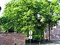 Liernu - Gros Chêne.jpg