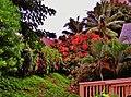 Lihue, Kauai, Hawaii - panoramio (30).jpg