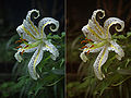 Lily-M7292-As-shot-and-manual.jpg
