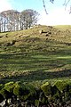 Limestone hillside and mossy wall - geograph.org.uk - 625413.jpg