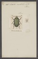 Lirides - Print - Iconographia Zoologica - Special Collections University of Amsterdam - UBAINV0274 011 12 0098.tif