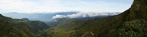 Livingstone Woods Panorama