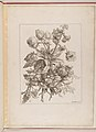 Livre de Toutes Sortes De Fleurs D'apres Nature MET DP210741.jpg