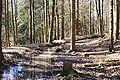 Loewenstein Muehlgraben Bleichsee 20070312 2.jpg