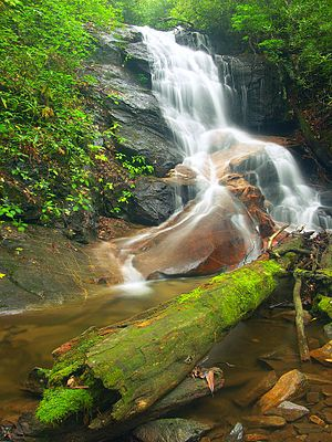 Log in log hollow falls.jpg