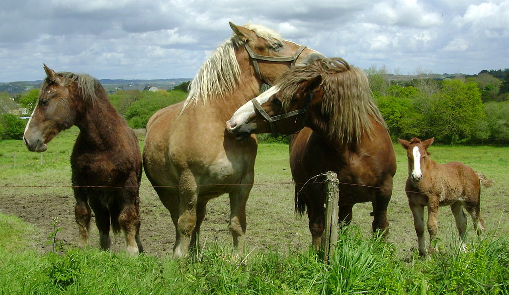 Is Horse Meat Used For Dog Food