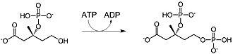 Mevalonate pathway - Image: M35bp K
