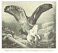 MECHELIN(1894) p039 Eagle-Owl and Hare.jpg