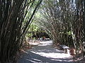 Magnolia Plantation and Gardens - Charleston, South Carolina (8555460689).jpg