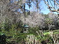Magnolia Plantation and Gardens - Charleston, South Carolina (8555513649).jpg