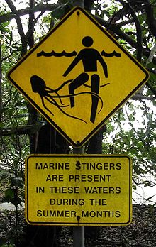 Jellyfish stings in Australia - Wikipedia