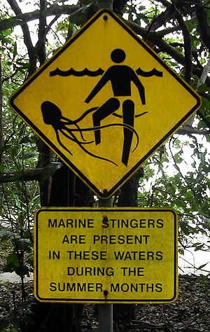 A signpost at a beach in Cape Tribulation, Que...