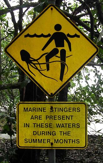 Box jellyfish - Box jellyfish warning signpost at a Cape Tribulation beach in Queensland, Australia