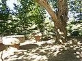 Merendero de La Terrera, con un gran platanero - panoramio.jpg