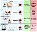 Methods of nuclear reprogramming, their advantages and limitations..jpg
