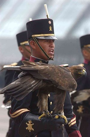 Heroic Military Academy (Mexico) - A cadet of the Heroic Military Academy (Mexico) with a golden eagle, the academy mascot.