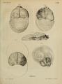 Meyer 1829 Nova Acta Phys-Med 15-2 pl 58.png