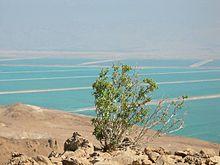 Saline nel Mar Morto