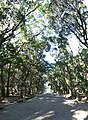 Miyazaki Jingu(shrine) , 宮崎神宮 - panoramio (1).jpg