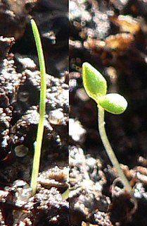 Seedling young seed plant