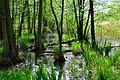 Moor 1 Röbelscher Wald Müritz Nationalpark.jpg