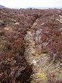 Moorland Path - geograph.org.uk - 771980.jpg