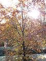 Morning frost (6958012012).jpg