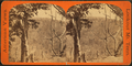 Mountain view from College Point, by E. & H.T. Anthony (Firm).png