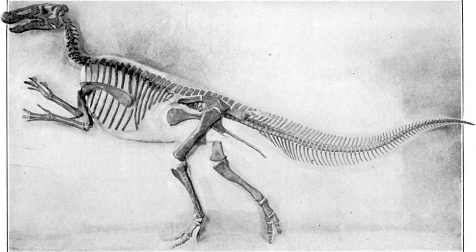 Mounted Edmontosaurus