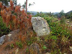 Muisca Petroglyph 2 - Páramo de Ocetá.jpg