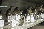Museum voor Dierkunde 2010PM 0345 21H7428.JPG