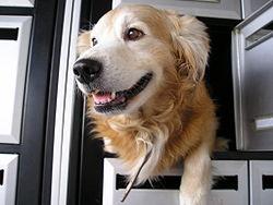 A playful dog