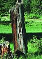 NRCSCO01030 - Colorado (1447)(NRCS Photo Gallery).jpg
