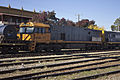 NR 55 and 89 freight train on the Main Southern line in Junee.jpg
