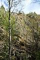 NSG Steinbruch Holzmühle (107).jpg