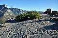 Na vrcholu Lví hlavy - Kapské město, Signal Hill - On Top Lion's Head - panoramio.jpg