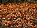 Namaqualand, Goegap 1033.jpg