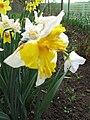 Narcis (13).jpg